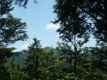 P1330847 栃原山.JPG