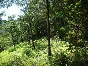 P1330854植林境斜面・下り.JPG