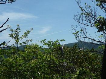 P1330864樹間に543m、栃原山を望む.JPG