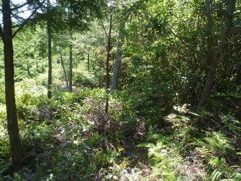 P1330871植林境・踏み跡をたどる.JPG