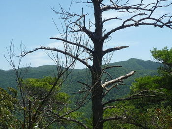 P1330873 裸地展望地から543m、栃原山.JPG