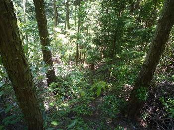 P1330878植林s間面・鞍部からわずかな踏み跡を下る.JPG