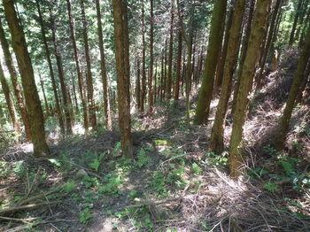 P1330879植林谷・踏み跡.JPG