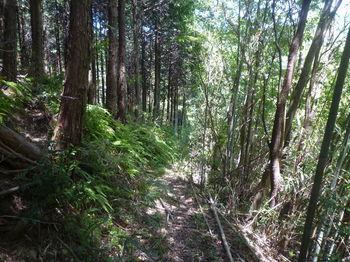 P1330887植林・竹林沿い.JPG