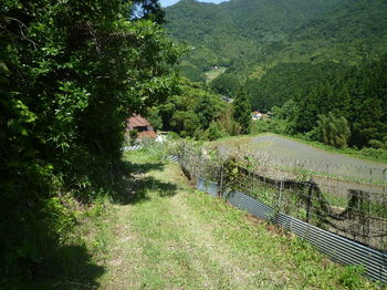 P1330890幅広農道へ出る.JPG