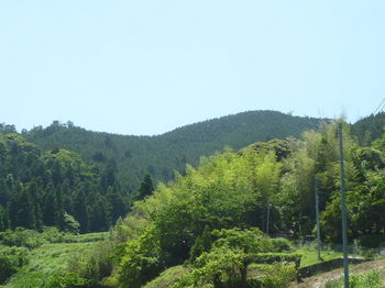P1330893三百山(左奥)・300mピーク.JPG