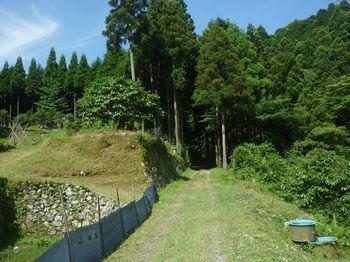 P1330907林道.JPG
