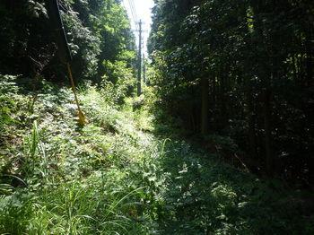 P1330935植林・沢沿い.JPG