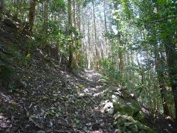 P1330941植林斜面沿い.JPG