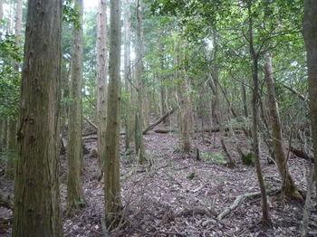 P1340009植林境・上り.JPG