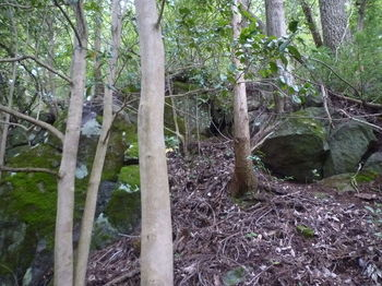 P1340024岩(逆方向).JPG
