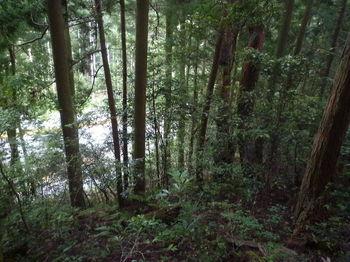 P1340026左下に県道が見える.JPG