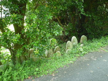 P1340206古墓.JPG