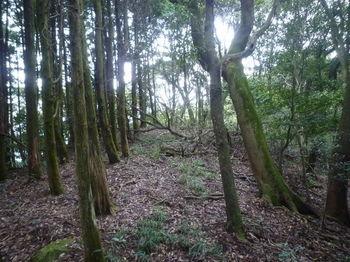 P1340463植林沿い.JPG