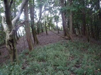 P1340480植林沿い.JPG