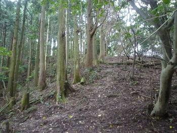 P1340487植林境尾根の上り.JPG