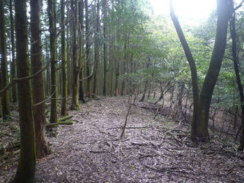 P1340493植林境.JPG