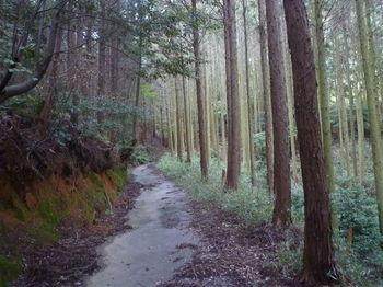 P1340555植林沿い.JPG