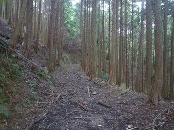 P1340557未舗装林道.JPG