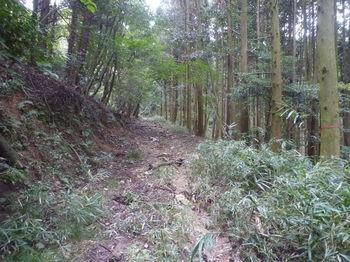 P1340560やや荒れた林道.JPG
