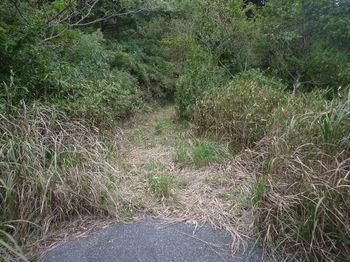 P1340576出口付近のササ刈り(逆方向).JPG