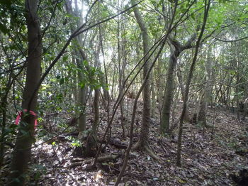 P1340665山頂手前の疎林ヤブ.JPG