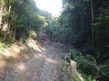 P1340695伐採地を抜ける.JPG