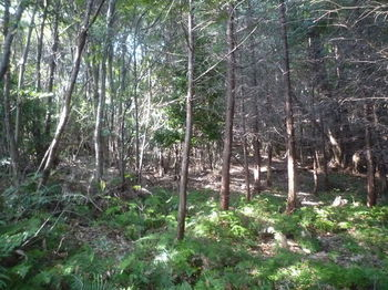 P1340726植林境.JPG