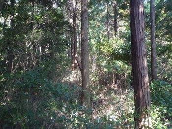 P1340806植林境・ササヤブ.JPG