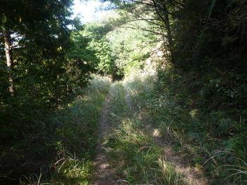 P1340827カヤが茂る林道.JPG