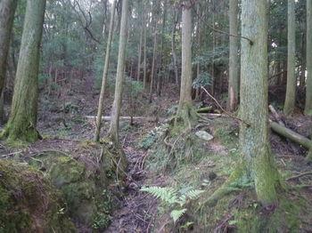 P1340872溝状の山道.JPG
