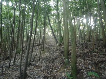 P1340874植林沿い.JPG