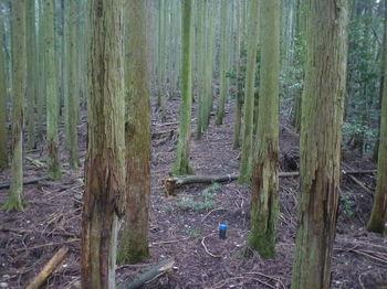 P1340877植林帯の80m鞍部.JPG