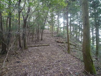 P1340905植林境.JPG