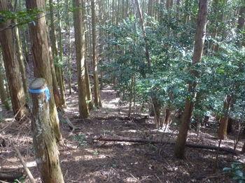 P1340922植林境・下り.JPG