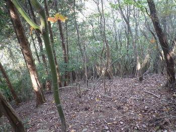 P1340967植林境・急勾配の下り.JPG