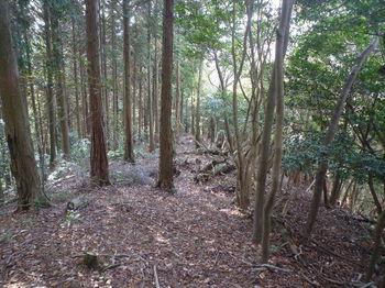 P1340994植林境・下り.JPG