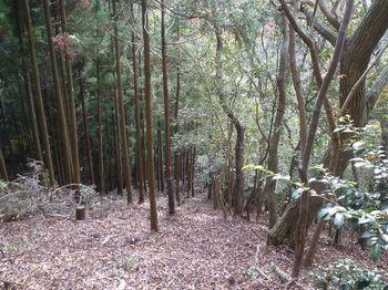 P1340997植林境・急勾配の下り.JPG