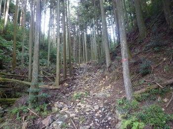 P1350035植林沿い.JPG