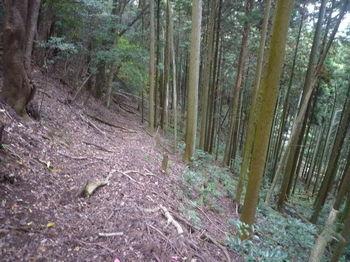 P1350040樅ノ木側の山道.JPG