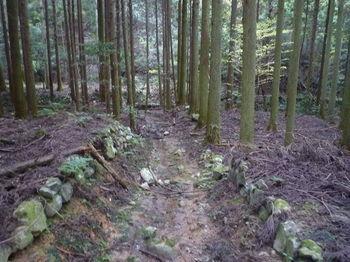 P1350069植林帯の山道.JPG