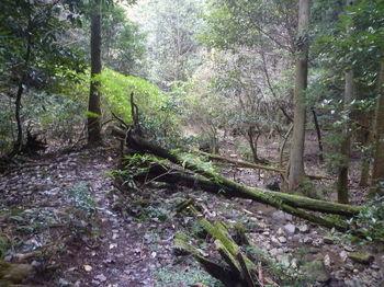 P1350088林道荒れ箇所.JPG