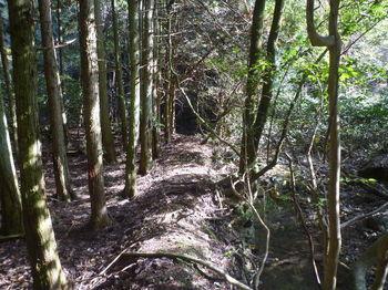 P1350095植林沿い.JPG