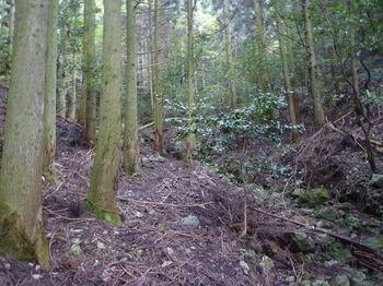 P1350121植林谷・踏み跡.JPG