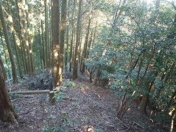 P1350146植林境・下り.JPG