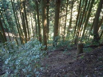 P1350149植林尾根に変わる.JPG