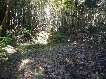 P1350196舗装林道終点.JPG