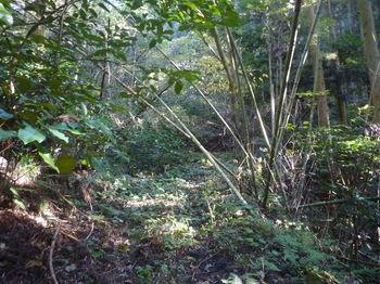P1350197未舗装林道.JPG