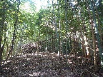 P1350225右植林境・上り.JPG