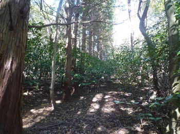 P1350236植林並木境(右鞍部方向).JPG